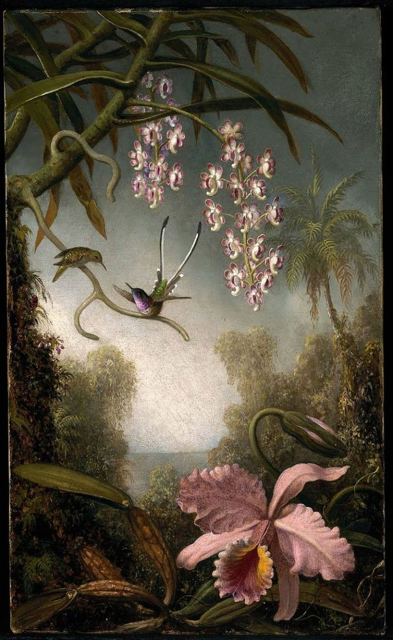 Image by MJ Heade Orchids and Spray Orchids with HummingbirdPublic Domain