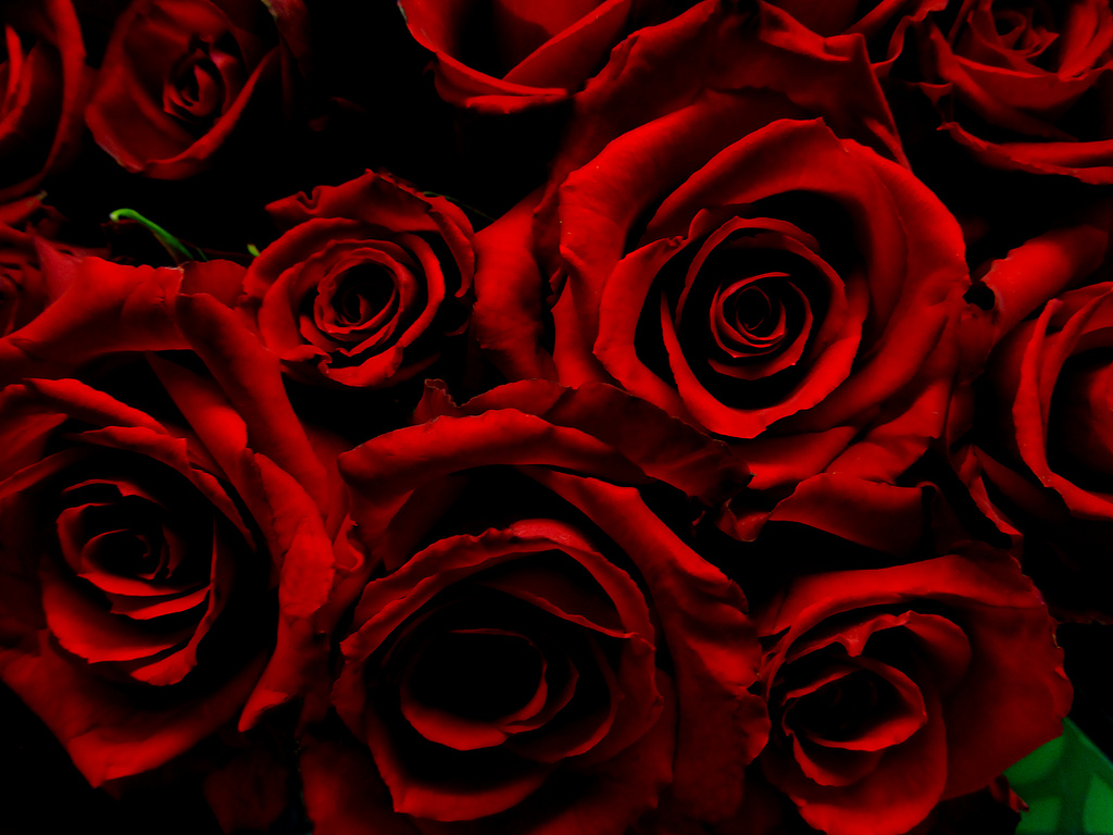 Image: Dark Red Roses by HPaich https://www.flickr.com/photos/39081697@N06/5990972852