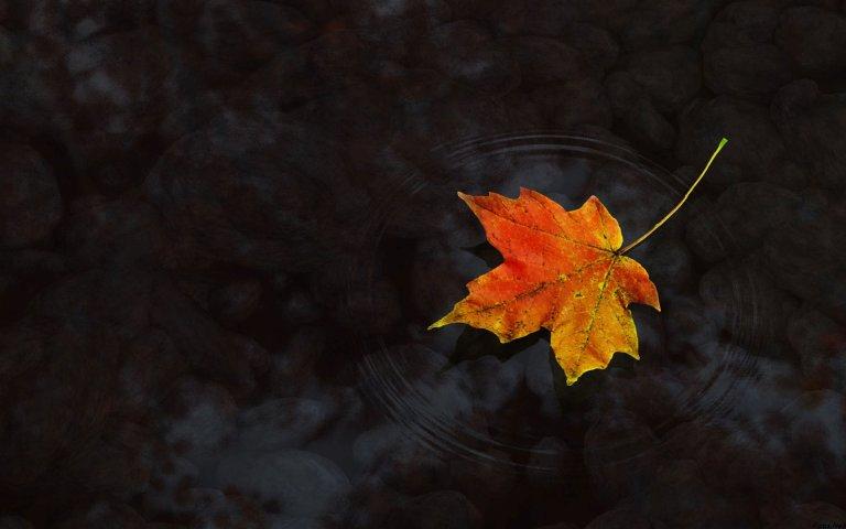 leaf-spring-76514