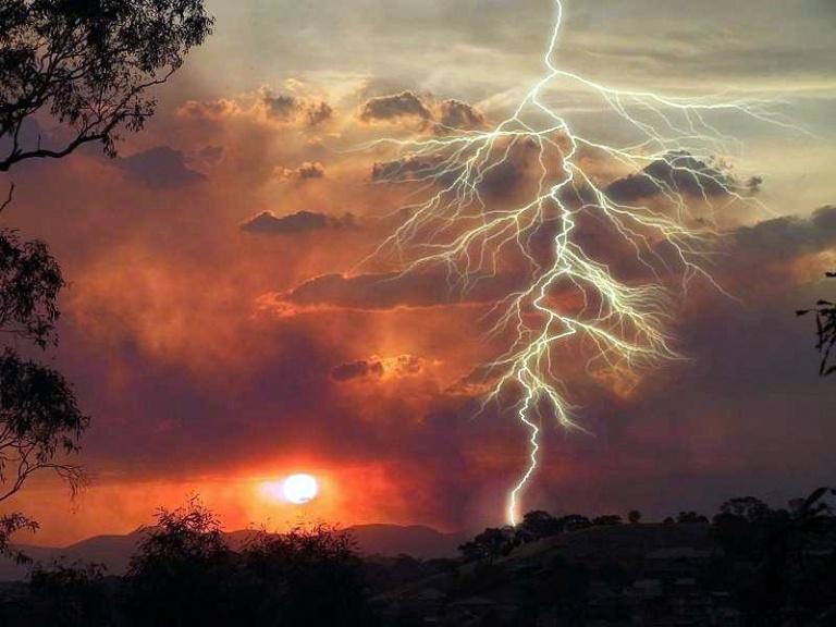 lightning-tree