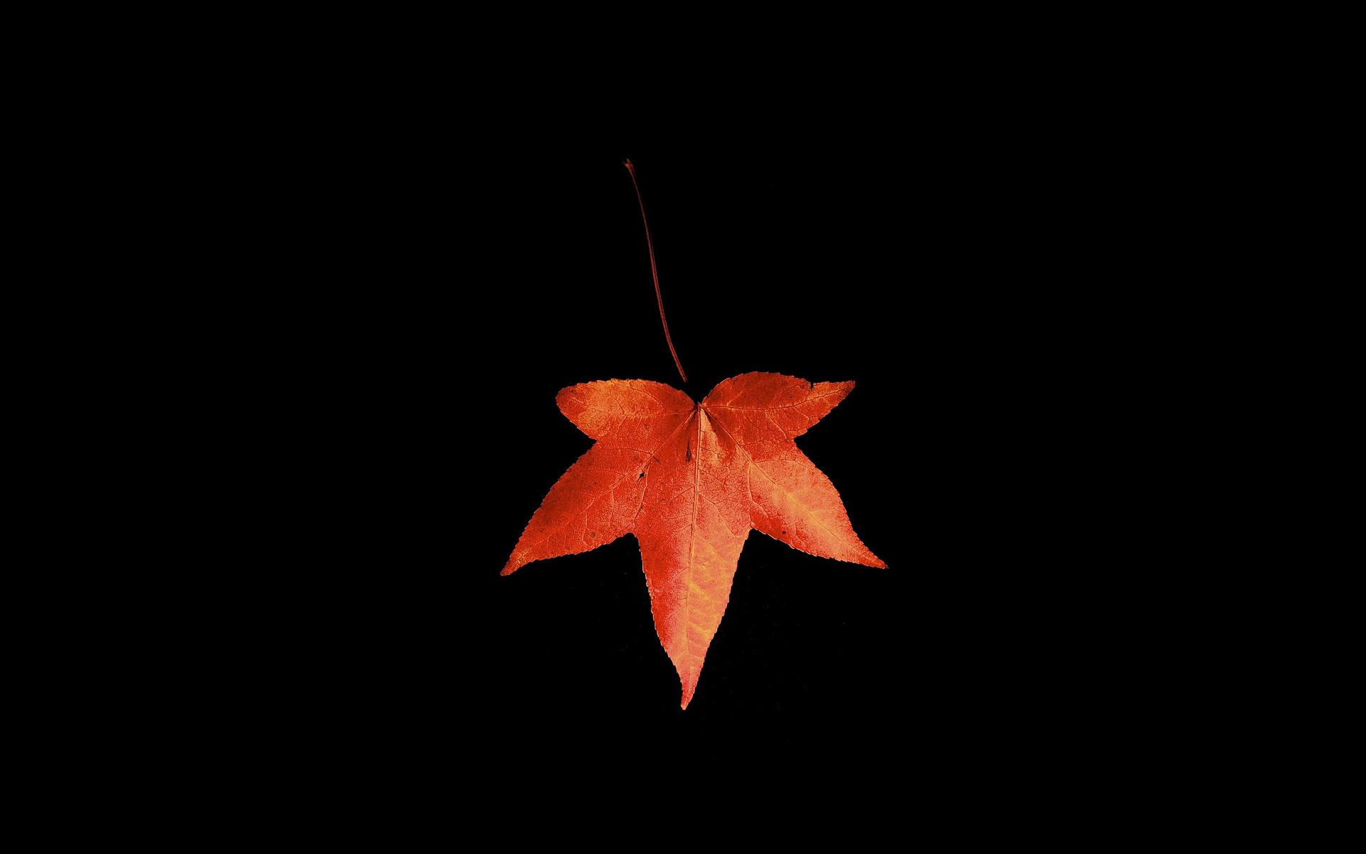 autumn-leaf-wide-wallpaper-582271