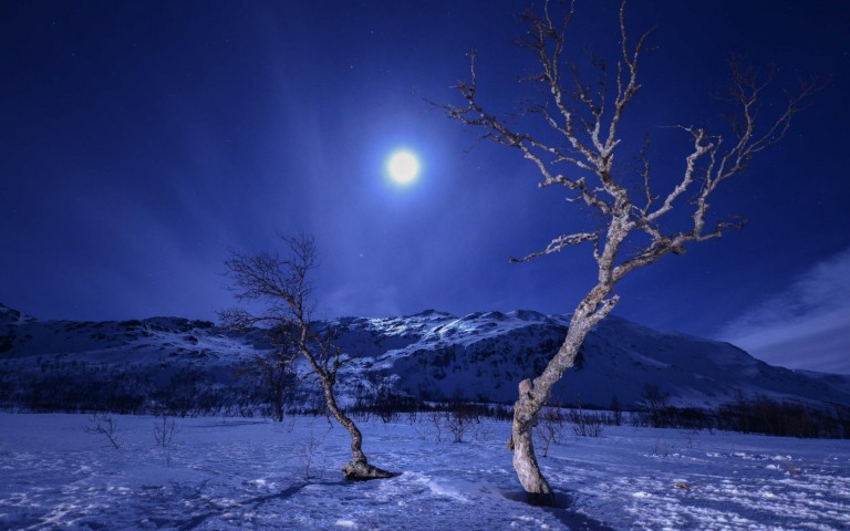 dead-tree-at-midnight-with-glowing-full-moon-wallpaper-by-kyouko-winter-moon-wallpaper-hd-free-wallpapers-download-for-android-desktop-changer-windows-xp-iphone-ipad-images