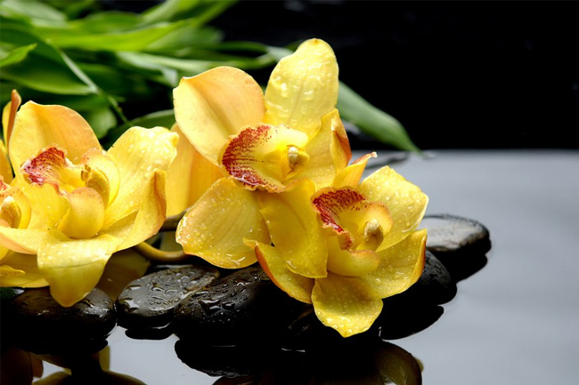 Orchids-reflection-wallpaper