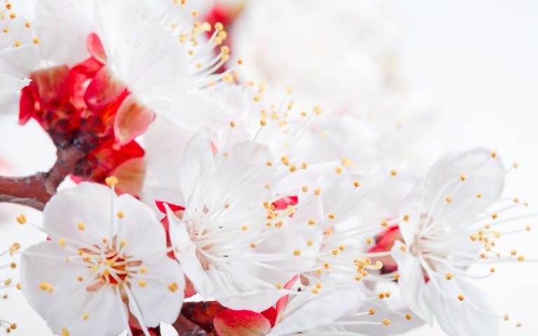 hd-flower-petals-wallpaper