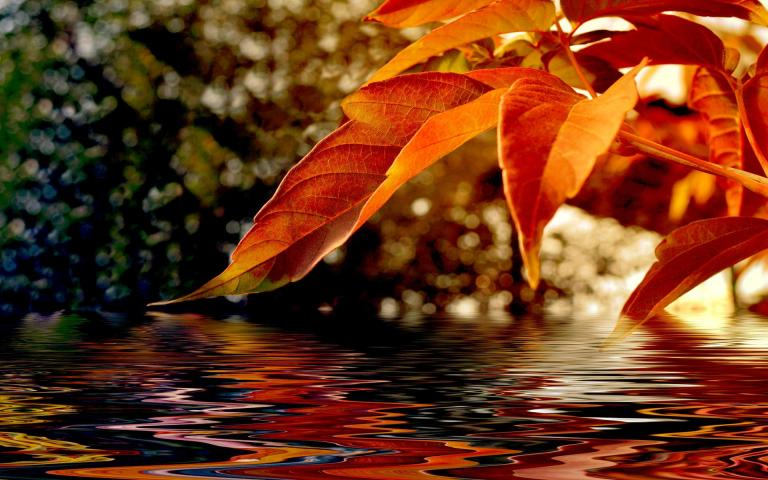 autumn_leaves-1579935