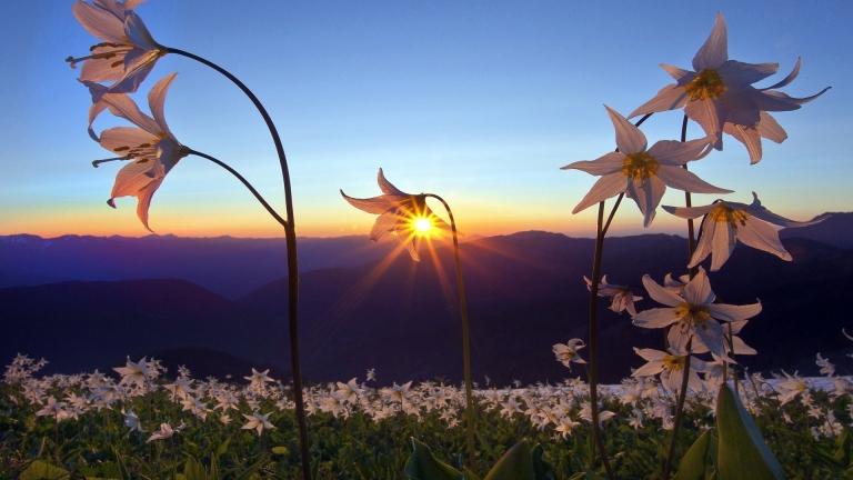 Beautiful-Sunset-Wallpaper