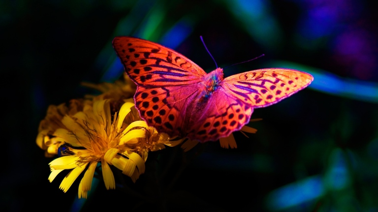 http://wallpaperscraft.com/image/flower_butterfly_flying_dark_83110_3840x2160.jpg