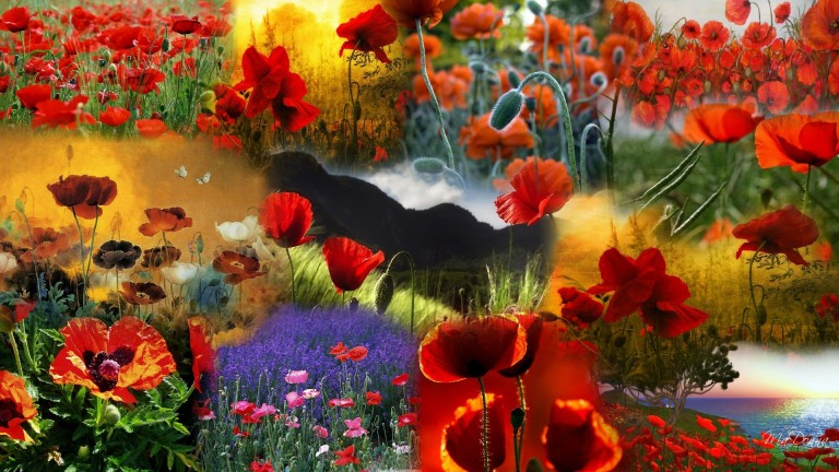 http://hdwallpaper.freehdw.com/0004/3d-abstract_hdwallpaper_my-poppy-collage_33092.jpg