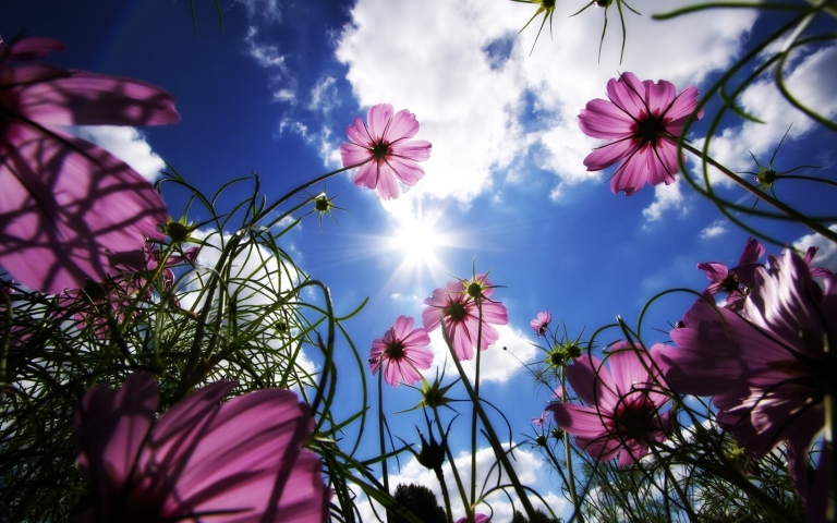 flowers_meadow_beams_sky_sun_clouds_21721_3840x2400