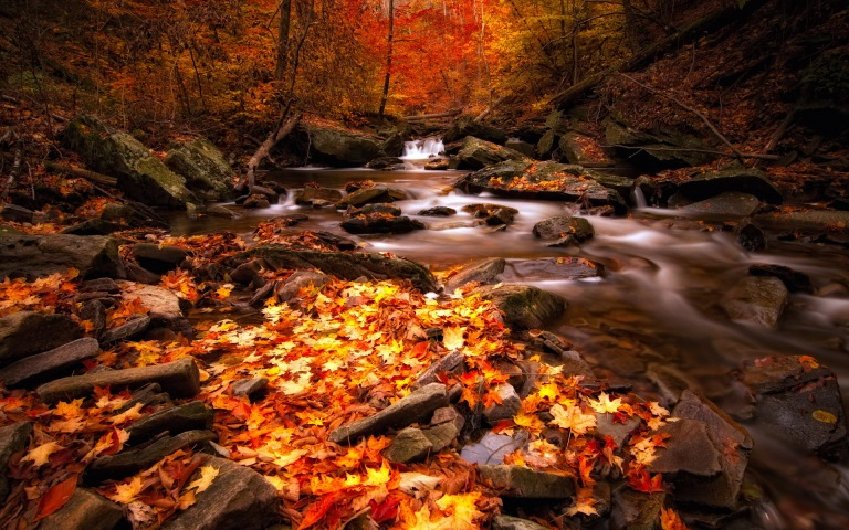 http://hdwallpaper.freehdw.com/0002/nature-landscapes_widewallpaper_autumn_12267.jpg