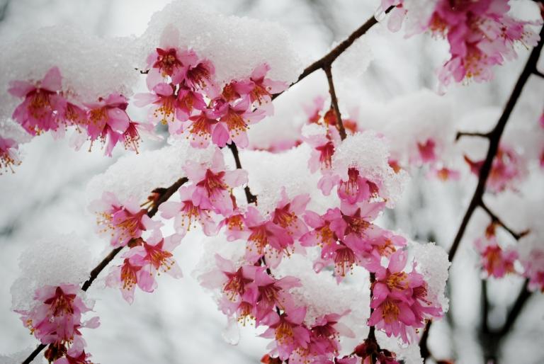 http://lifeinautofocus.com/wp-content/uploads/2013/03/snow-in-spring2.jpg