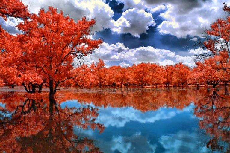 natural-red-lake-trees-wallpaper