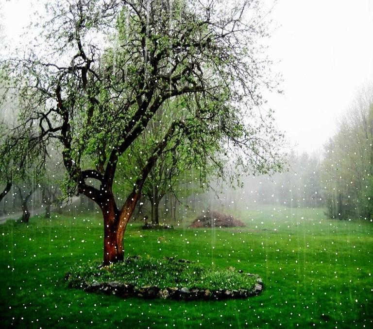 Image: http://newtopwallpapers.com/wp-content/uploads/2013/04/Beautiful-Rain-Falling-Wallpaper.jpg