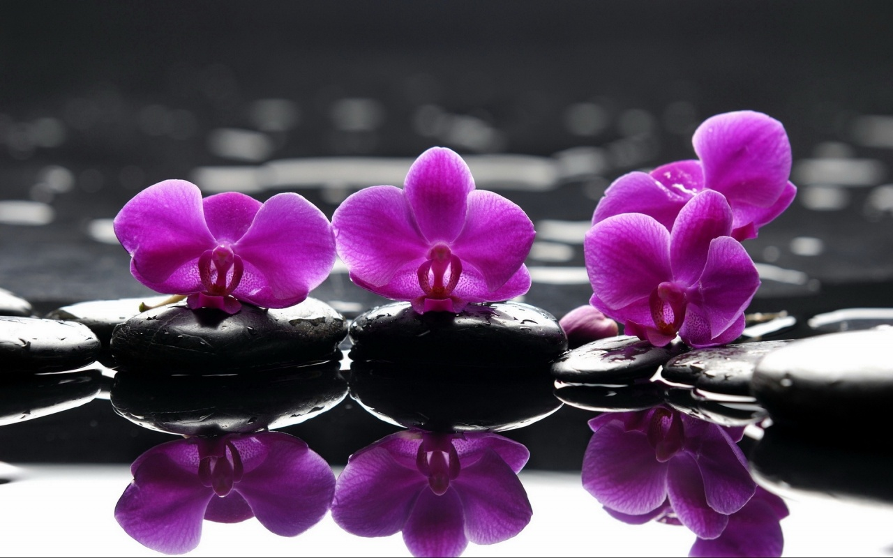 Image: http://www.windows-8-wallpapers.com/wallpapers/orchid-water-reflections-windows-8-wallpaper-1280x800.jpg