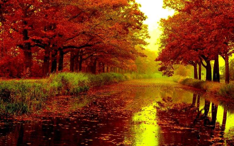 Image: http://www.mamujunews.com/wp-content/uploads/autumn-rain-trees-wet-road-nature-forests-hd-wallpaper-1551061-20150207181852-54d6570c141d2.jpg