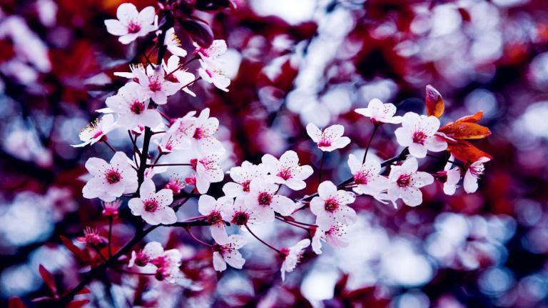 Spring-Images-For-Facebook-1
