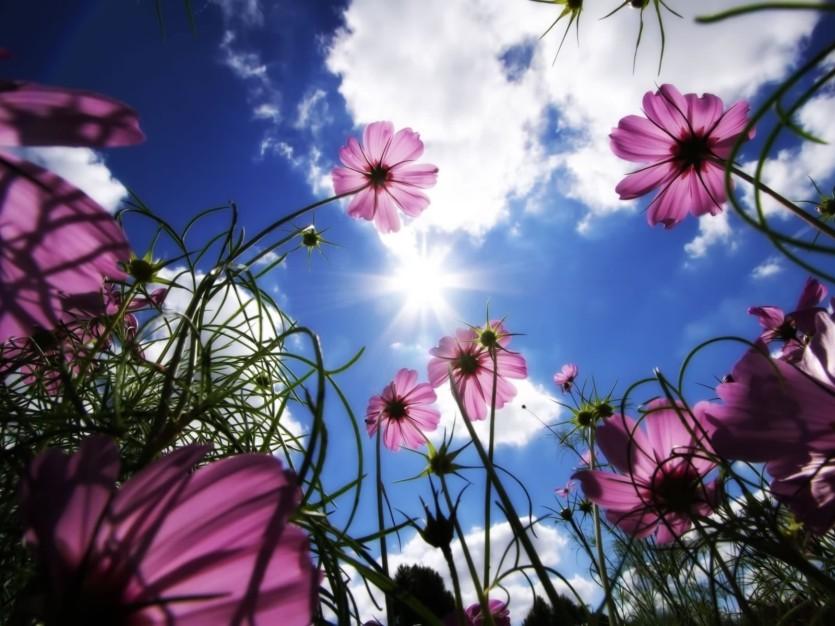 Image: http://4.bp.blogspot.com/_oJpV6yalpOk/TQi4Lr5FzyI/AAAAAAAAAcQ/f8OgEZ7pcFo/s1600/The-best-top-desktop-flower-wallpapers-9.jpg