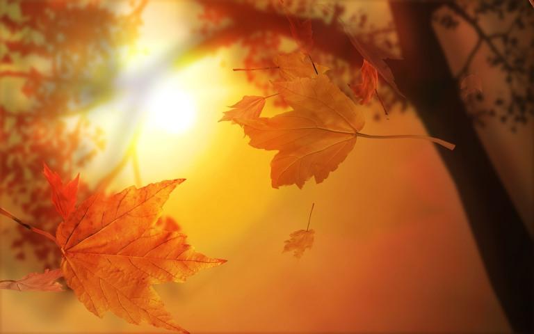 3d-autumn