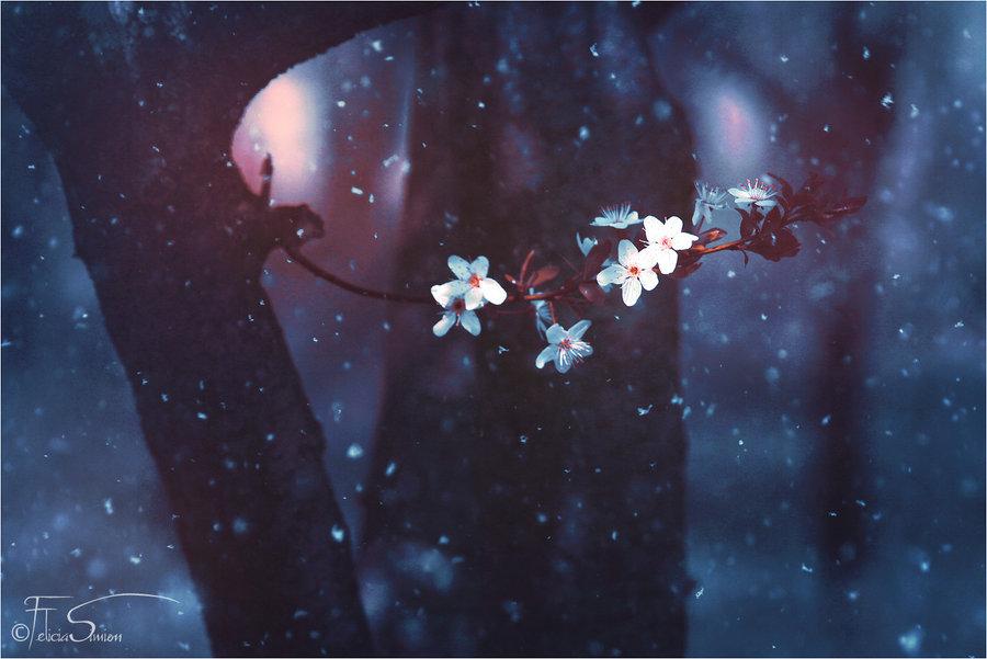 Image: http://fc04.deviantart.net/fs70/i/2012/285/0/a/a_cherry_winter___wallpaper_by_ineedchemicalx-d5hjqbp.jpg
