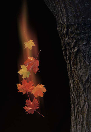 Image: http://images2.layoutsparks.com/1/55170/fall-maple-leaves-falling-31000.jpg