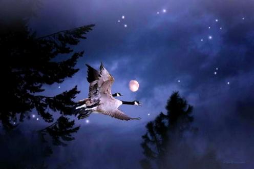 Image: http://images.hdwpics.com/16438353E92A/Night-Flight.jpg