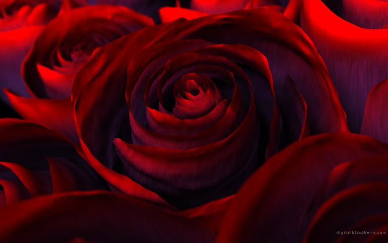 rose-red-flower-beautiful
