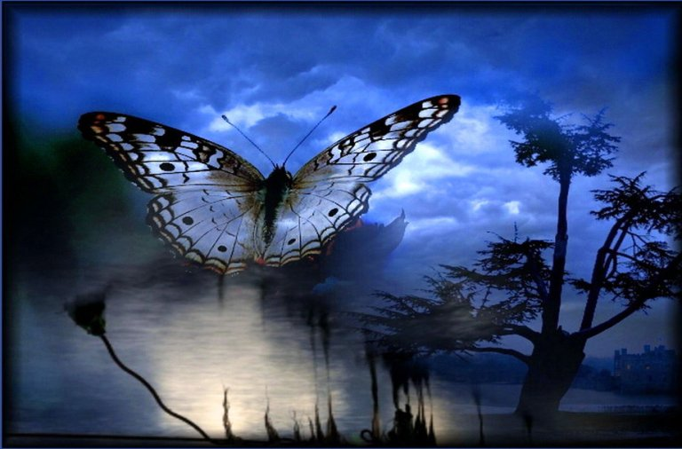 379504__a-flutter-in-the-night_p