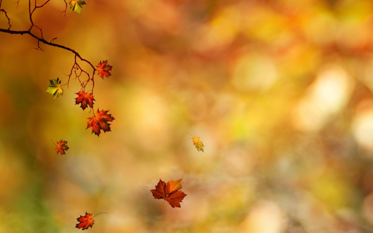 6922994-autumn-leaves-falling