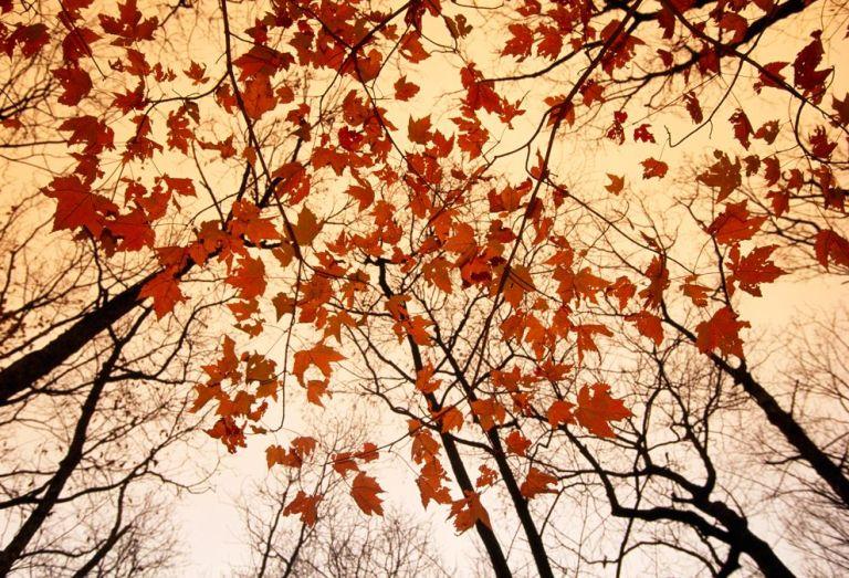 autumn-leaves-gehman_59048_990x742