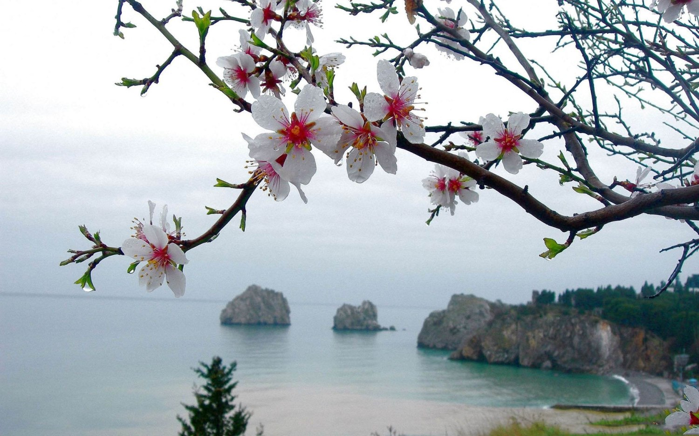 Beautiful-White-Flower-HD
