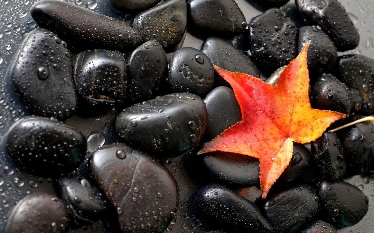 black-stones-autumn-leaf-wide-wallpaper-567293