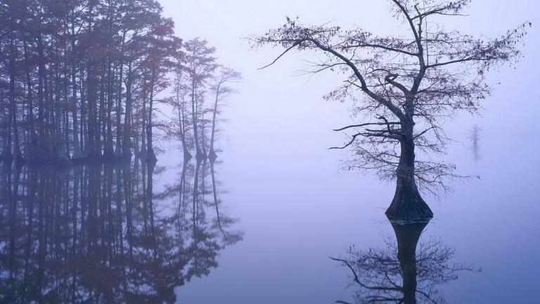 misty-lake-24514