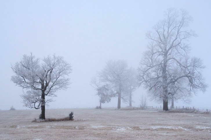 misty-morning-in-Waconia-485x728