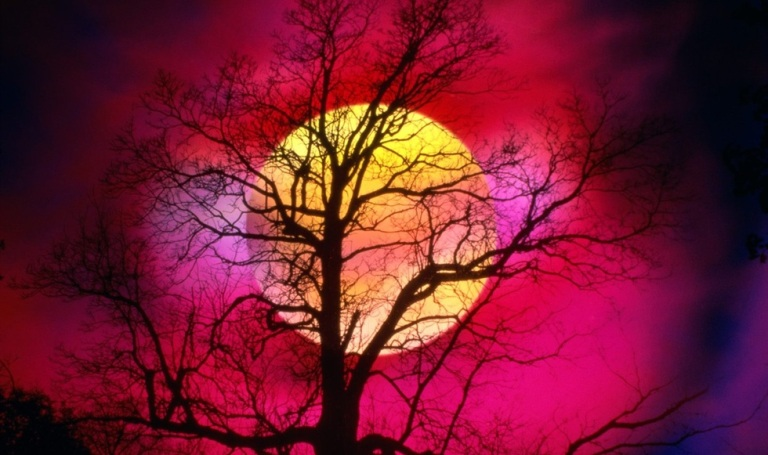 orange-moon-dead-tree-scary-night-preview