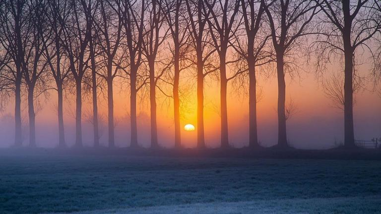 sunrise_between_the_trees_frosty_sky_grass_2560x1440_hd-wallpaper-1871315