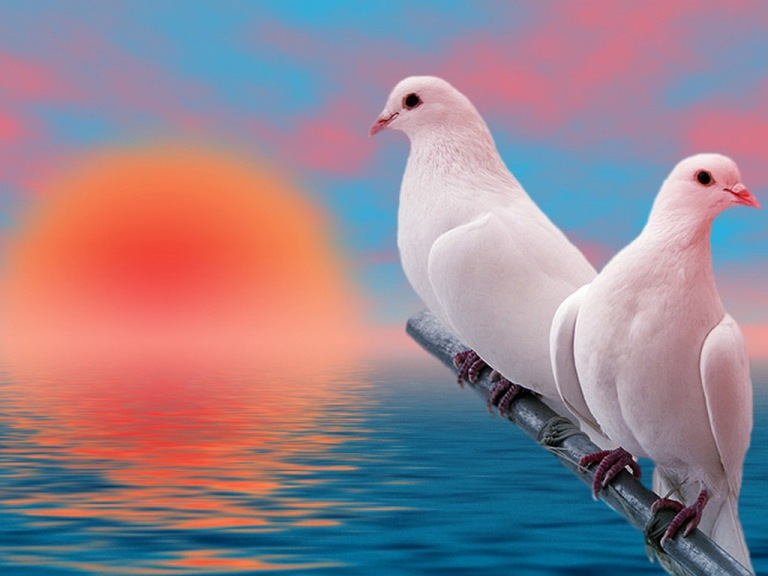 15 Beautiful White Dove High Quality Wallpapers
