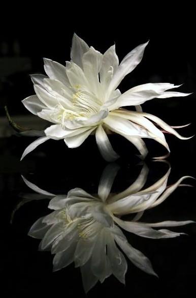 347381-Moon-Flower-Anna-Pham-760x11401_zpse3cf5912