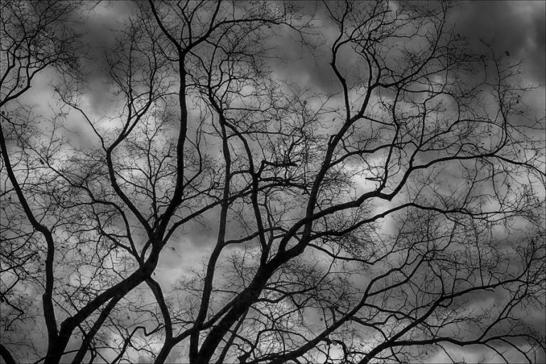 branches-and-rain-clouds-robert-ullmann