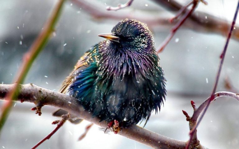 colorful-bird-in-the-rain-316945