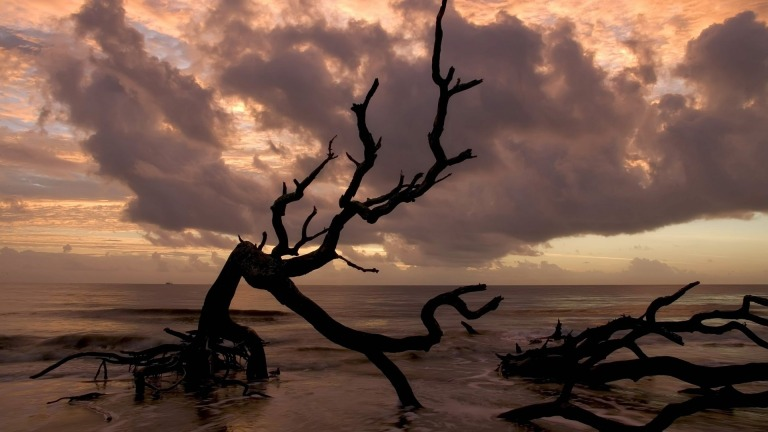 dark-trees-in-a-beige-sea-with-clouds