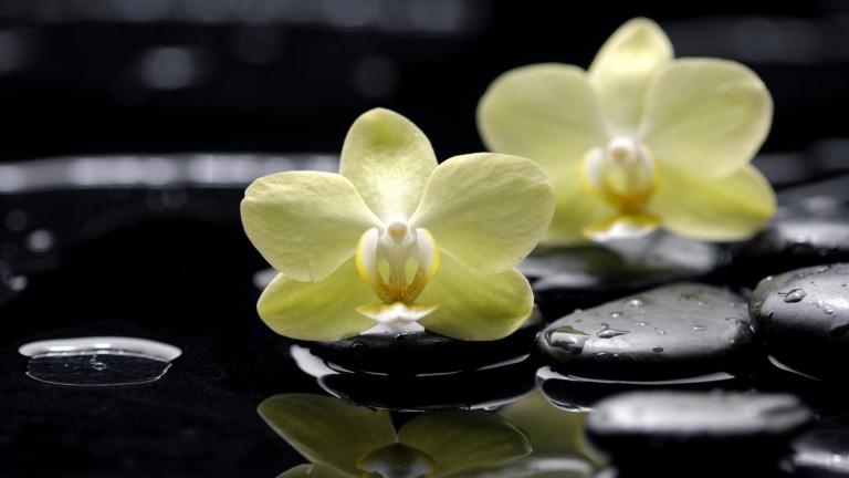 flowers_orchids_phalaenopsis_yellow_rocks_flat_black_drop_water_reflection_83442_3840x2160