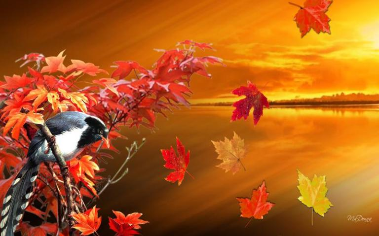nature-landscapes_hdwallpaper_fall-leaves-blowing-at-sunset_10753