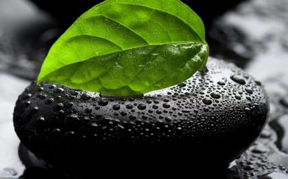 nature leaf water drops pebbles selective coloring color isolation 1920x1200 wallpaper_www.artwallpaperhi.com_42