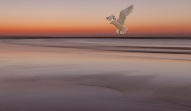 nebo-zakat-more-otliv-ptica