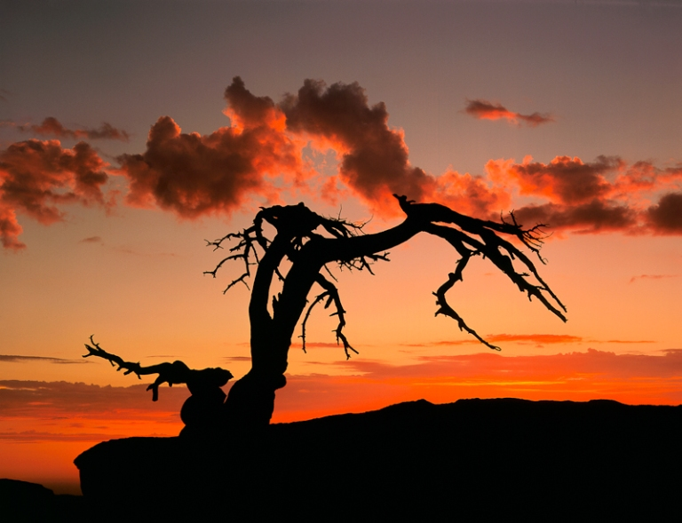 Neill_William_Storm-clouds-at-sunset-Jeffrey-Pine-on-Sentinel-Dome-Yosemite-National-Park-California_Landscapes_2012