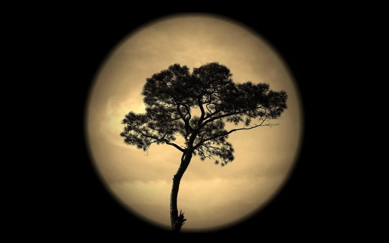 noch-nebo-luna-derevo-siluet
