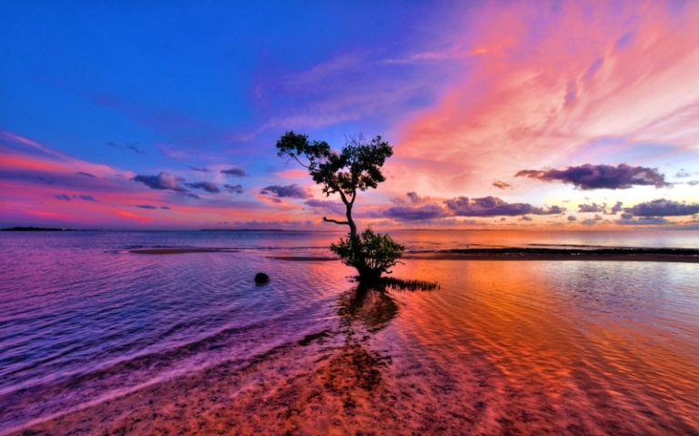 water sunset clouds landscapes nature coast trees skyscapes 1920x1200 wallpaper_www.wall321.com_31