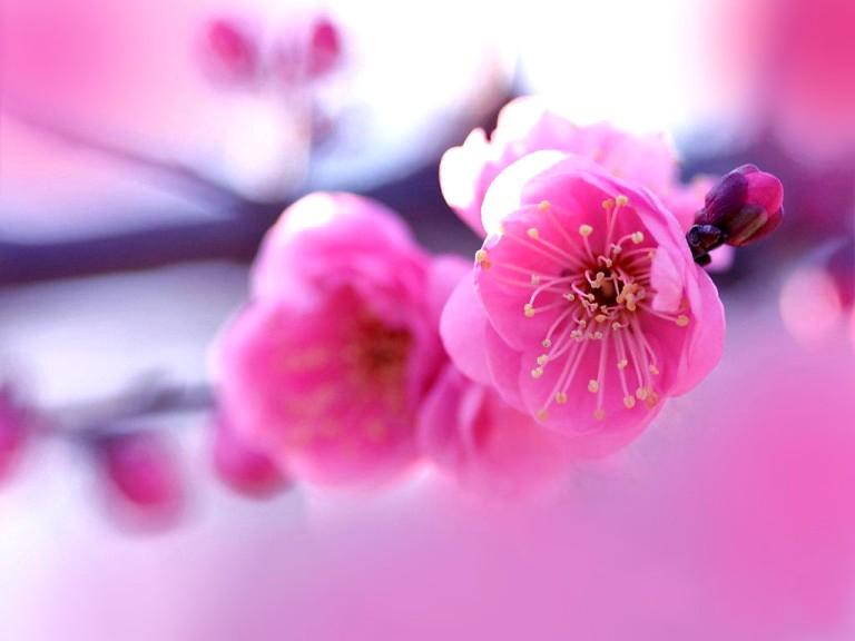 6775009-beautiful-flower-pictures