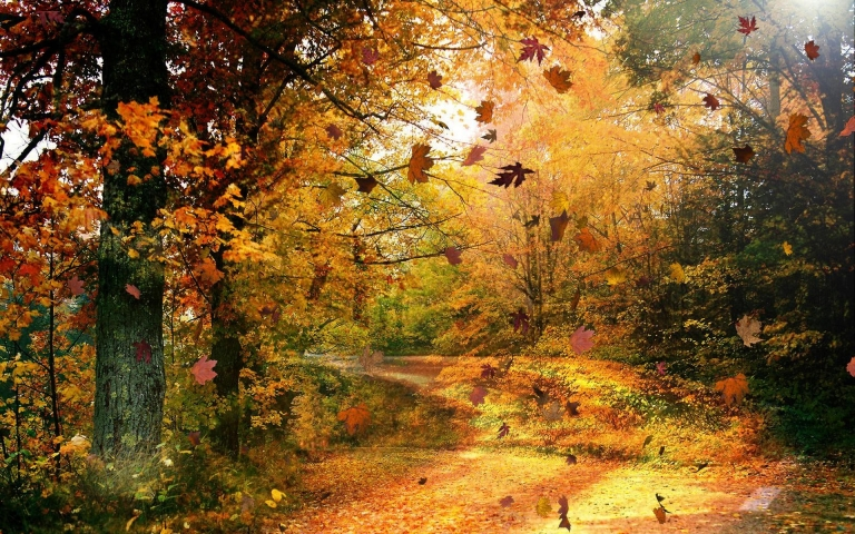 autumn-leaves-29
