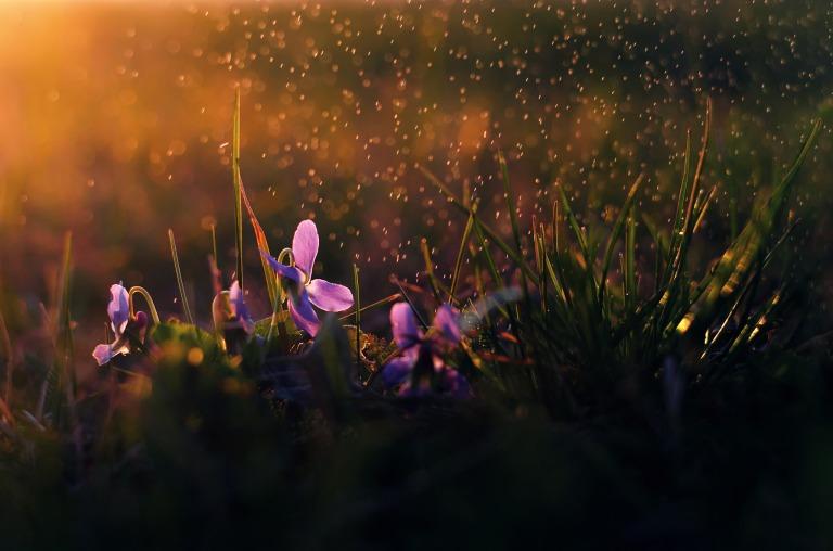 cvety-dozhd-utro